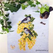 Bullfinches on Silver Wattle1