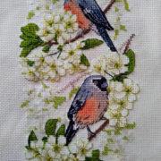 Bullfinches on Cherry Tree2