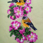 Bullfinches on Rosa Majalis3