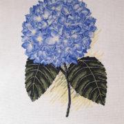 Blue Hydrangea2