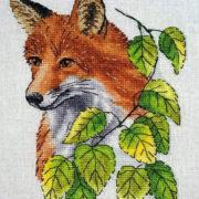 Spring Fox1