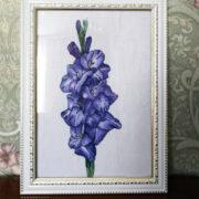 Blue gladiolus2