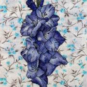Blue gladiolus3