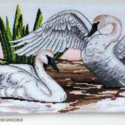 Trumpeter swan2