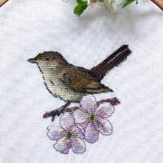 Thrush Nightingale1
