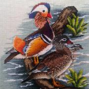 Mandarin duck1