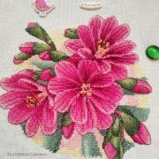 Lewisia pink3
