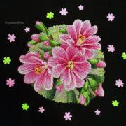 Lewisia pink2