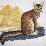 Egyptian Mau Cat2