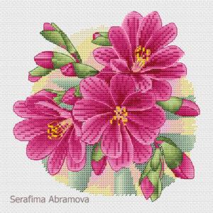Lewisia pink