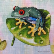 Red Eyed Tree Frog3