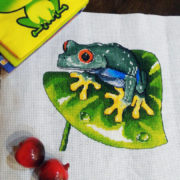 Red Eyed Tree Frog1