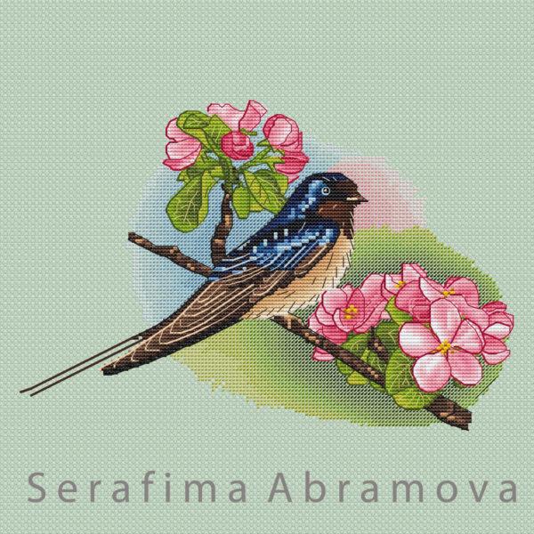 Barn Swallow12