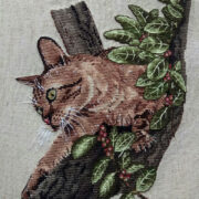 Sokoke Forest Cat1