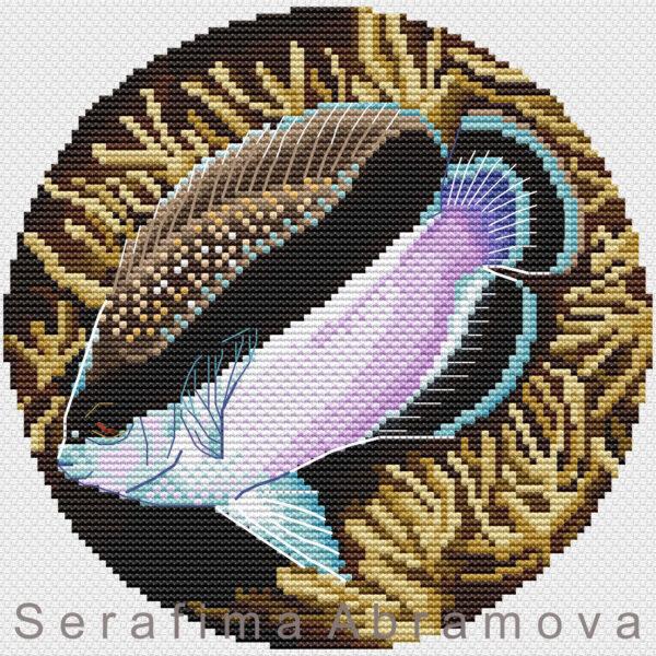Angelfishes. Apolemichthys Аrcuatus