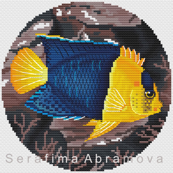 Angelfishes. Bicolor Аngelfish