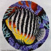 Multi Barred Angelfish1